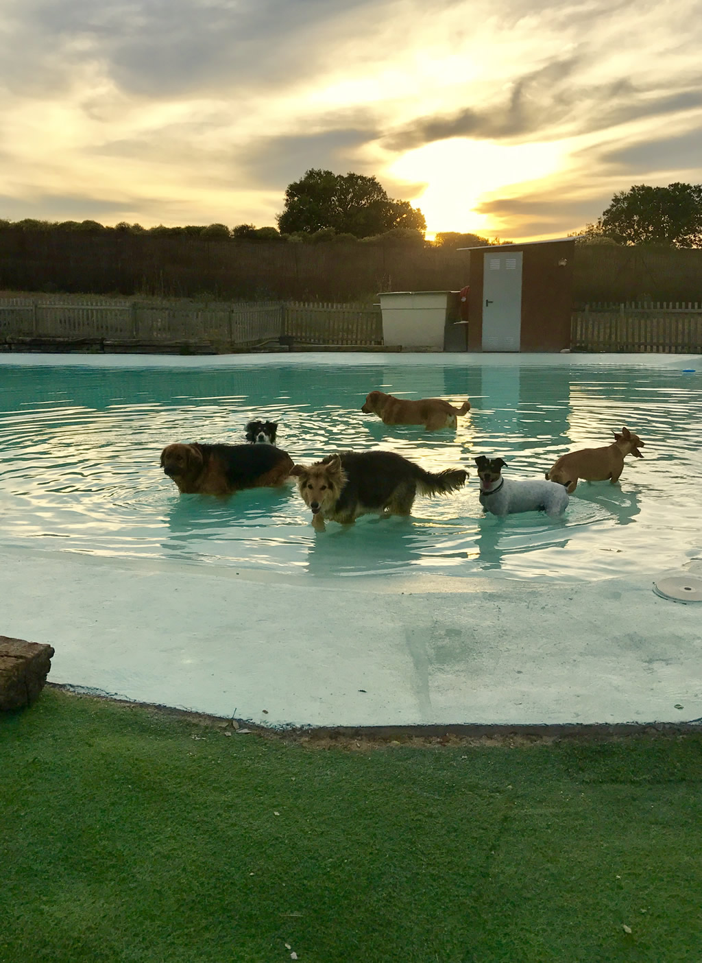 Parque y piscina para perros campus perruno for Piscina para perros